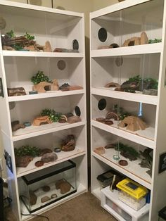 Image result for leopard gecko shelves