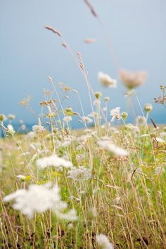 I wildflower l