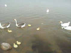 Sushna lake chandigarh