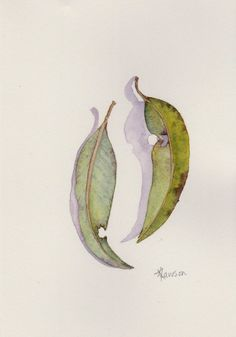 Painting of 2 gum leaves ~ original watercolour art by AnneLawsonArt on Etsy Arches Watercolor Paper, Watercolor Leaves, Floral Watercolor, Watercolor Paintings, Tree Of Life Artwork, Painted Leaves, Leaf Art, Botanical Art, Origami