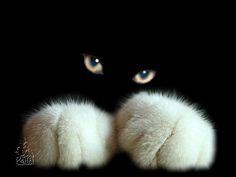 White fuzzy paws & glowing eyeballs