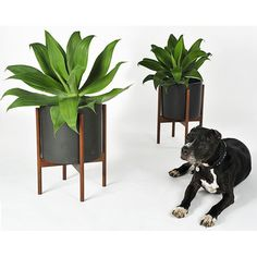 Case Study Cylinder Plant Pot With Stand, Small - $149.00 : DIGS | Free shipping on orders over fifty dollars | Modern furniture, housewares, decor & gift items.