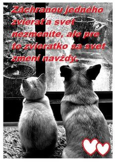 Co dodat... Jednoho doma mám Motto, Animals And Pets, Ads, Education, Quotes, Quotations, Educational Illustrations, Learning, Mottos