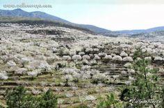 Valle del Jerte, culto a la flor