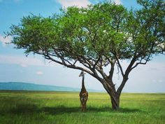 5 Reasons Tanzania is an Extraordinary Destination for Families Kenya Travel, Africa Travel, Wildlife Safari, Amazing Destinations, Holiday Destinations, African Safari, Travel Aesthetic, Day Tours, Tanzania