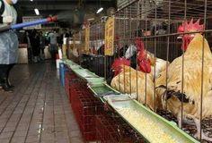 Κρούσμα της γρίπης των πτηνών στην Ακρινή Κοζάνης