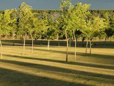 Long evening shadows Shadows, Golf Courses, Garden, Darkness, Garten, Lawn And Garden, Gardens, Gardening, Outdoor
