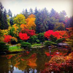 Seattle Japanese Garden in Washington Park Arboretum