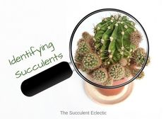 Succulent identification is important. Identify different types of succulents by their characteristics and a succulent identification chart!