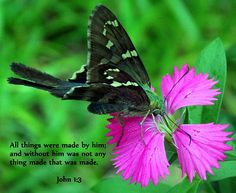 John 1:3 with Silver Spotted Skipper on Flower, Flower, Nature, Scripture, Christian, bible verse, butterfly, print, framed print, canvas print, tin print, acrylic print, wall art, wall décor, photo art, photography, Christian art, greeting card