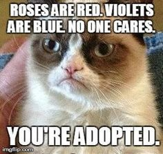 The 30 Best Grumpy Cat Memes You Can Respond to Emails WithWhen your friend tells you they think Magna Carta Holy Grail is Jay Z's best album. Grumpy Cat never gets old, so why not respond to your most annoying e-mails with the most intolerant cat around. Grumpy Cat Quotes, Funny Grumpy Cat Memes, Cat Jokes, Animal Jokes, Funny Animal Memes, Funny Cats, Funny Animals, Funny Jokes, Funny Sarcastic