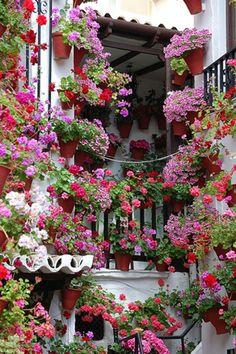 Courtyard garden in Cordoba, Spain