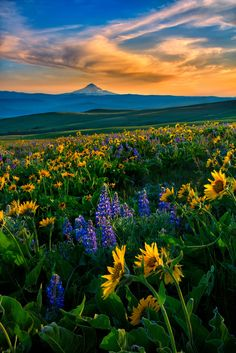 Sunset at Columbia Hills State Park, Washington