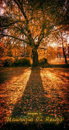 Her Majesty in autumnal suit. (Edited) by Maurizio Di Renzo on Autumnal, Flora, Country Roads, Suits, Collection, Outfits, Plants, Suit, Men's Suits