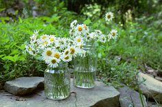 daisies have always, always been my favorite.