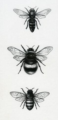 Lisa Alderson - LA - Bees