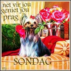 Lekker Sondag Afrikaanse Quotes, Goeie Nag, Goeie More, Day Wishes, Friend Pictures, Happy Sunday, Picture Quotes, Good Morning, Friends