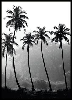 Stylish photo print on the palms. Black and white print that does well in most interior styles. www.desenio.com
