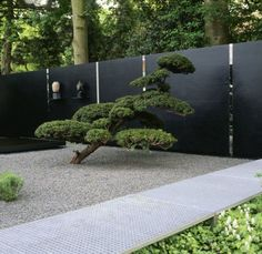 Sculpted pine and creased steel and mirror wall. lord that bonsai!