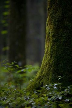 The Enchanted Forest: Little Life by Chris Hatfield Old Trees, Forest Floor, Walk In The Woods, Tree Forest, Woodland Forest, Amazing Nature, Belle Photo, Mother Nature, Nature Photography