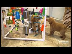 Adventure Box, Create with PVC and dogs toys from Gill-Roy's Hardware, assemble and add pups! Puppy Playpen, Pet Puppy, Dog Puzzles, Puzzle Toys, Great Swiss Mountain Dog, Puppy Playground, Puppy Socialization, Old Golden Retriever, Puppy Room