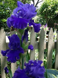 iris for a stronger purple or whatever color we need it