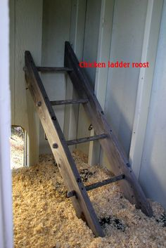 chicken roosting bars | Roost - we used our old swingset monkey bars for our roost. We may add ...