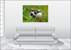 Premium Textil-Leinwand 120 cm x 80 cm quer Ein Motiv aus dem Kalender von Babett Paul - Papageitaucher - kleine Vögel ganz groß! Papageitaucher ( Puffins) in Irland Bunt, Little Birds, Animal Themes, Diving, Ireland, Calendar, Canvas, Animales