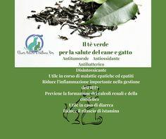 Tè verde Epigallocatechina gallato per la salute del cane e gatto   Elicats Holistic Pets
