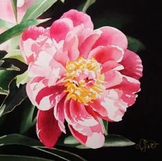 50 Shades of Pink, painting by artist Jacqueline Gnott Watercolor Mixing, Watercolor And Ink, Watercolor Flowers, Watercolor Paintings, Watercolors, Flower Paintings, Painting Flowers, Peonies Season, Pink Painting