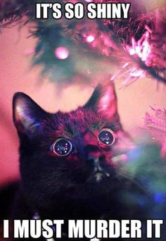 Good heavens but this is funny! Pretty well sums up cats during the holidays :).  crazy cats be like its so pretty! i must murder it.