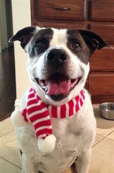 Candy Cane Striped Knit Scarf for Dogs Color Red/White. Fastened