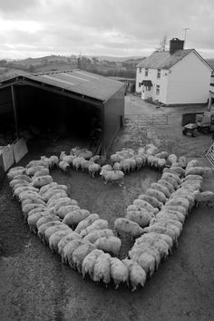Welsh hearts