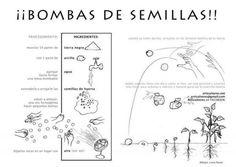 bomba de semillas
