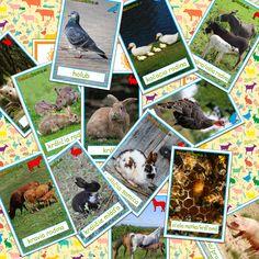 Domáce zvieratá – rodiny – VeseloDoma.sk