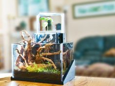An All-in-one Aquatic Ecosystem That Fits On Your Desk