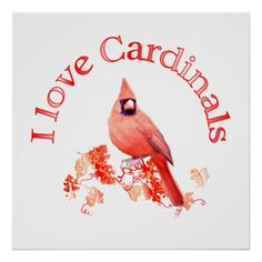 Shop I Love Cardinals Poster created by TLArnold. Personalize it with photos & text or purchase as is! Pretty Birds, Love Birds, Beautiful Birds, Bird Meaning, State Birds, Cardinal Birds, Bird Pictures, Cardinal Pictures, Wild Birds