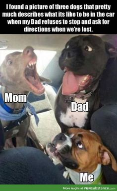 22 Funny Animal Pictures for Today - Humor bilder - Animals Dog Jokes, Funny Dog Memes, Crazy Funny Memes, Really Funny Memes, Funny Relatable Memes, Funny Dogs, Funny Stuff, Funny Horses, Cat And Dog Memes
