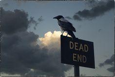 Crow (von Dragan*)