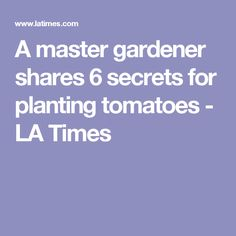 A master gardener shares 6 secrets for planting tomatoes - LA Times