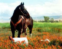 Field of Dreams... ♥ Horse Photography by Don Schimmel. #Western #Equine #Country #Flowers #Lazy_day #Horseback_riding
