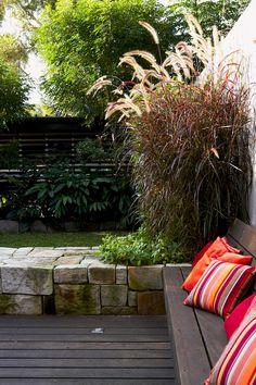 Garden Life- Foxtail Grass (Pennisetum advena 'Rubrum')
