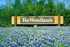 Texas Blue Bonnets in The Woodlands  #StephenDempsey #DempseyProperites #TheWoodlands