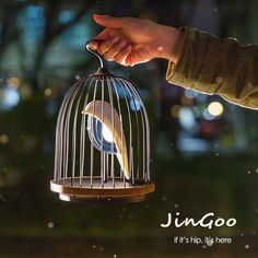 This Caged Bird Sings. And Provides Light. Meet JinGoo.
