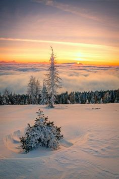 Almost all Landscape & Nature photography, with a very few motivational/inspiration quotes. Winter Pictures, Nature Pictures, Beautiful Pictures, I Love Winter, Winter Time, Winter Fun, Beautiful Sunset, Beautiful World, Winter Photography