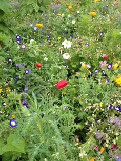 my schreber garden with potsdamer flower seeds. Looks colorful even on a gray day. Flower Seeds, Colorful, Gray, Garden, Flowers, Plants, Grey, Garten, Gardens