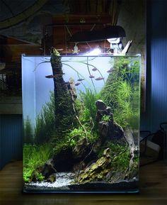 Great tips how to hide aquarium filter and heater in nano cube fish tank. Planted Aquarium, Aquarium Terrarium, Aquarium Fish Tank, Aquascaping, Aquarium Landscape, Nature Aquarium, Nano Cube, Cool Fish Tanks, Aquarium Accessories