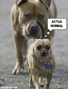 actua-normal Funny Animals With Captions, Cute Animal Memes, Funny Animal Quotes, Animal Jokes, Cute Funny Animals, Animal Captions, Funny Quotes, Funniest Animals, Animal Humour