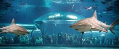 The Oklahoma Aquarium is home to the world's largest captive bull sharks and hundreds of other underwater creatures.