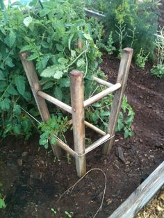 bar stool to tomato plant support